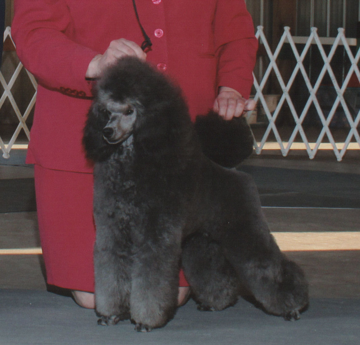 Multi BISS Silver GCH. Horizon's Absolutely Me, TP